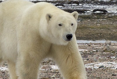 Featured News: Park's Upper School Arctic Researchers Embark on New Project in Churchill, Manitoba