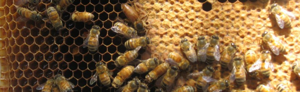 Park Beekeepers